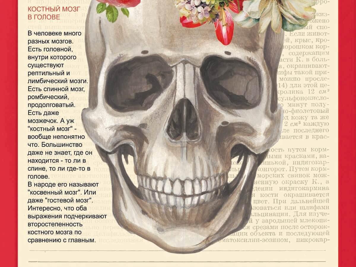 Цвет костного мозга